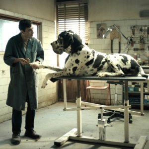dogman-matteo-garrone